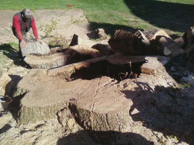 Tree Removal, Stump Removal serving Alexandria, Arlington, Falls Church, Springfield, Lorton, Fairfax,