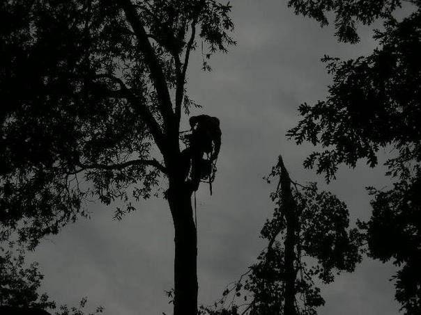 Tree trimming, tree thinning, tree pruning serving Alexandria, Arlington, Falls Church, Springfield, Lorton, Fairfax, VA