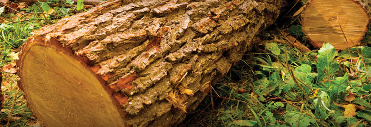 Wright's Logging & Tree Service main banner image - Graham, WA