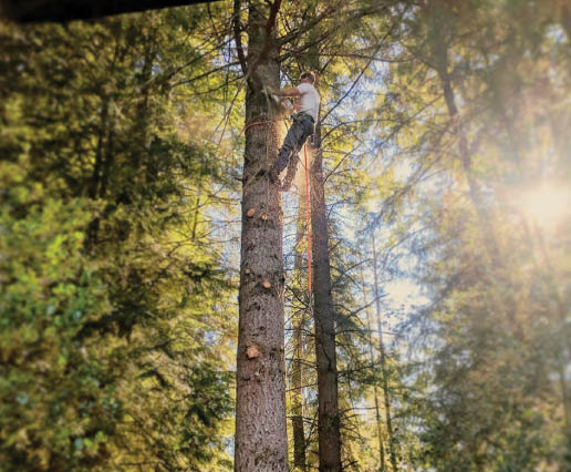 Wright's Logging & Tree Service - Graham, WA - Tree service companies - tree removal - tree pruning