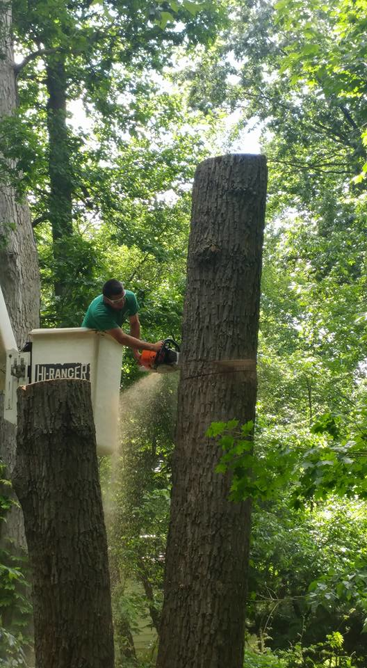 commercial tree service, residential tree service, AAA Tree Service Northern Virginia