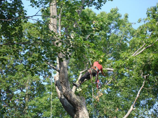 tree trimming contractors New Jersey