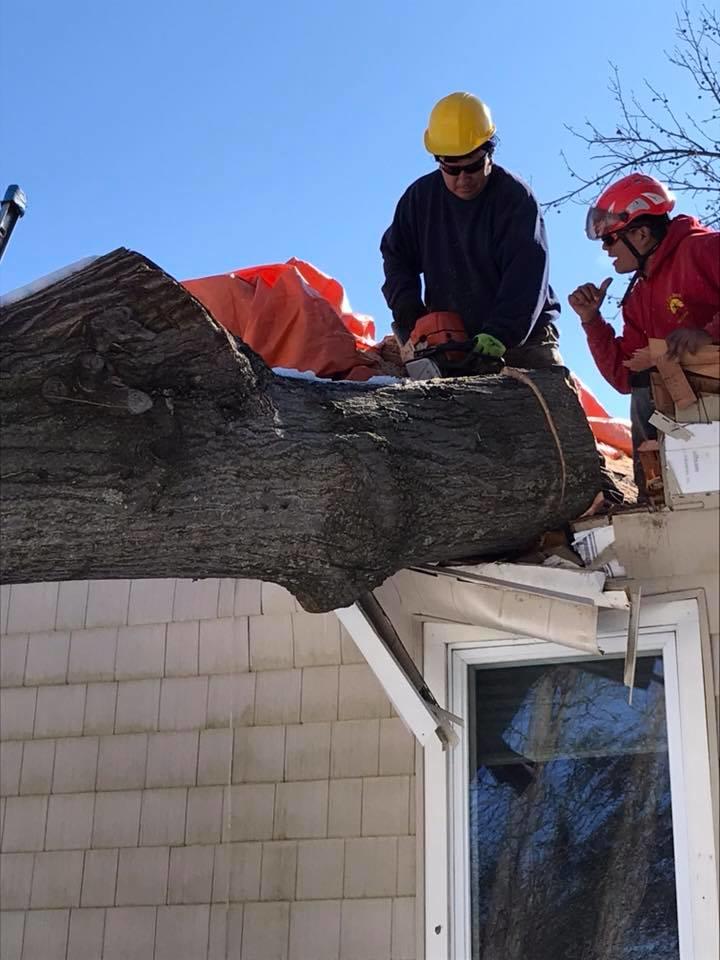 arborists in Westfield, NJ