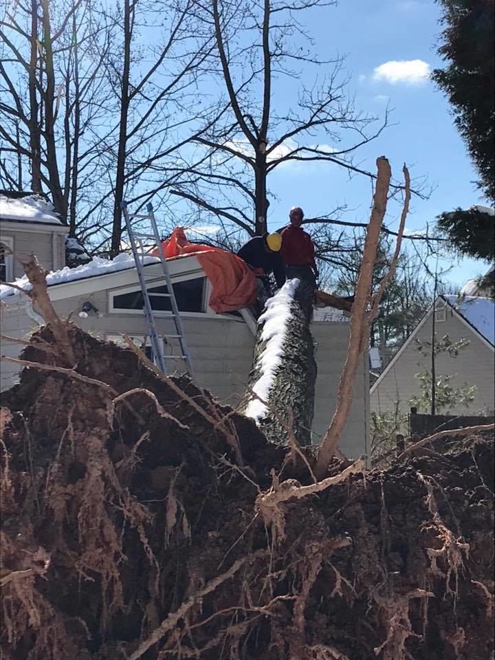 stump grinding & removal by A1 Tree Service