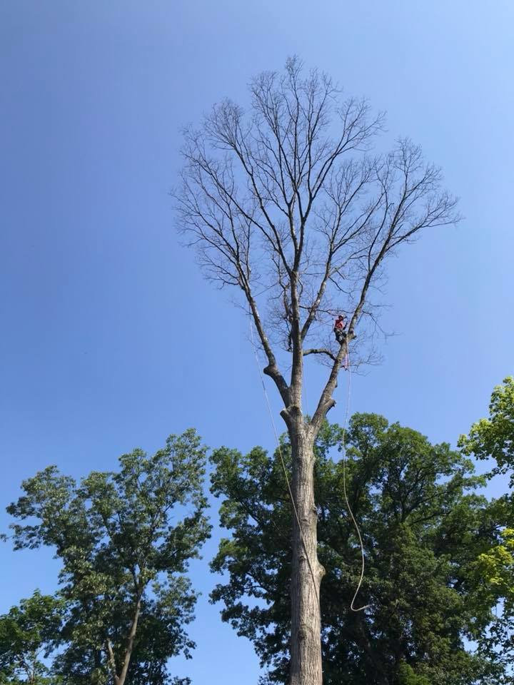 tree care specialists Westfield New Jersey