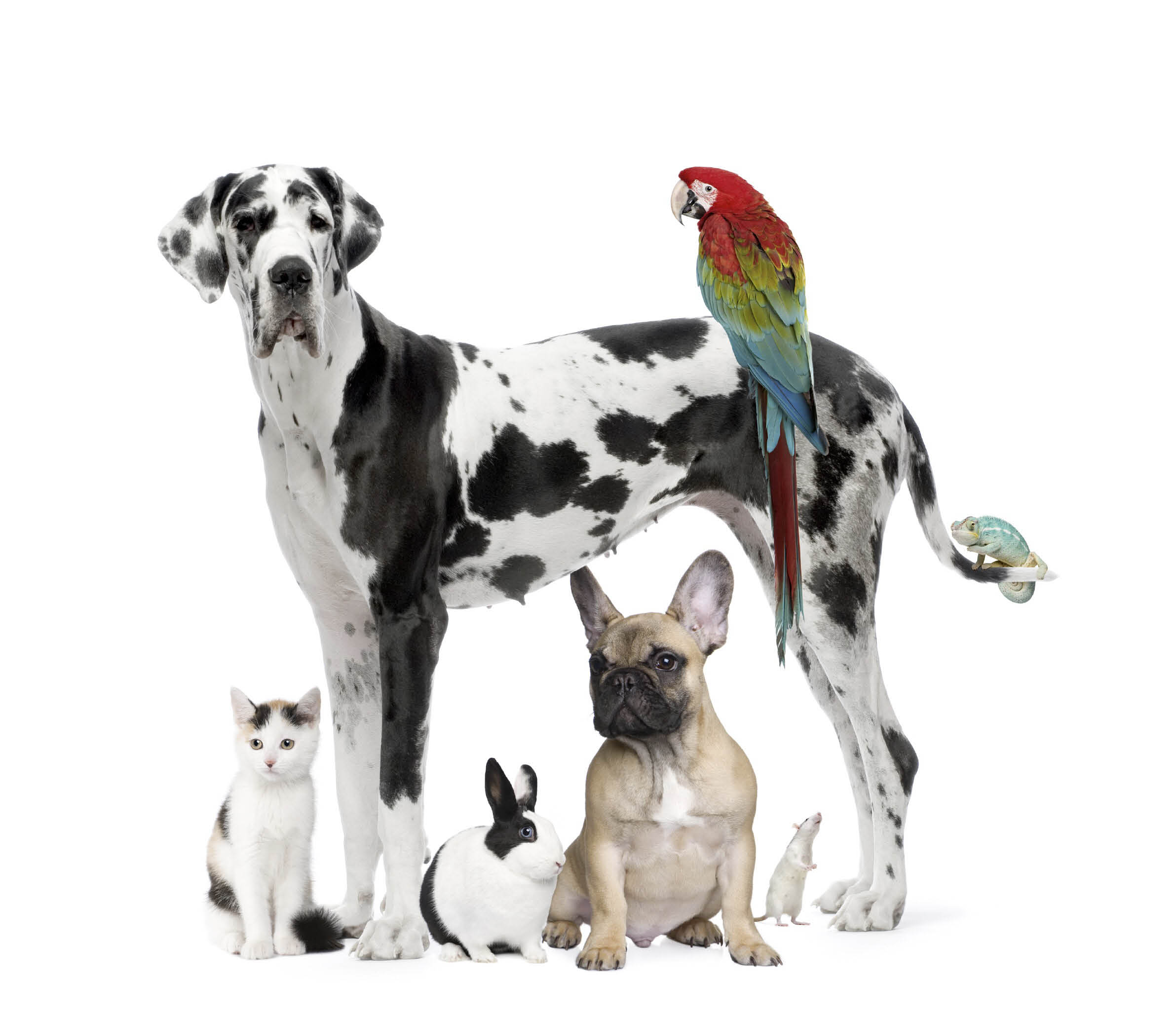 Academy Pet Hospital Albuquerque veterinarian
