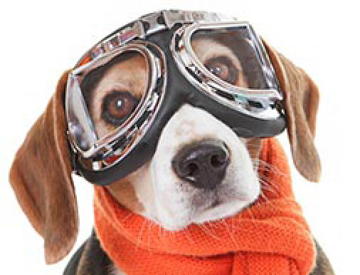 flying dog; club pet international chantilly virginia