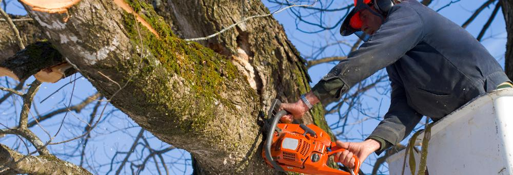 complete tree service, tree cutting, stump removal