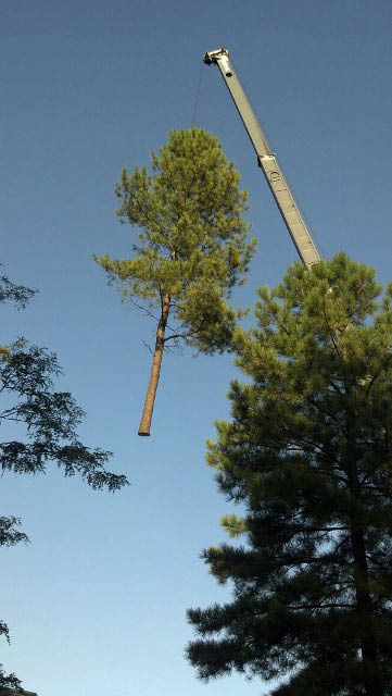 Crane and bracing by Allen and Sons tree service in baltimore Maryland
