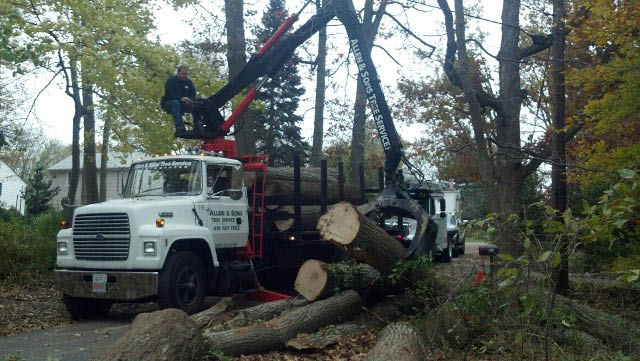 Professional tree removal by Allen and Sons Tree Service in baltimore maryland
