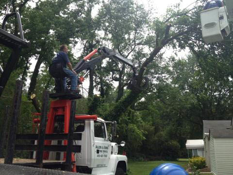 Tree and Stump Removal by the professional crew at Allen and Sons Tree service in baltimore, md