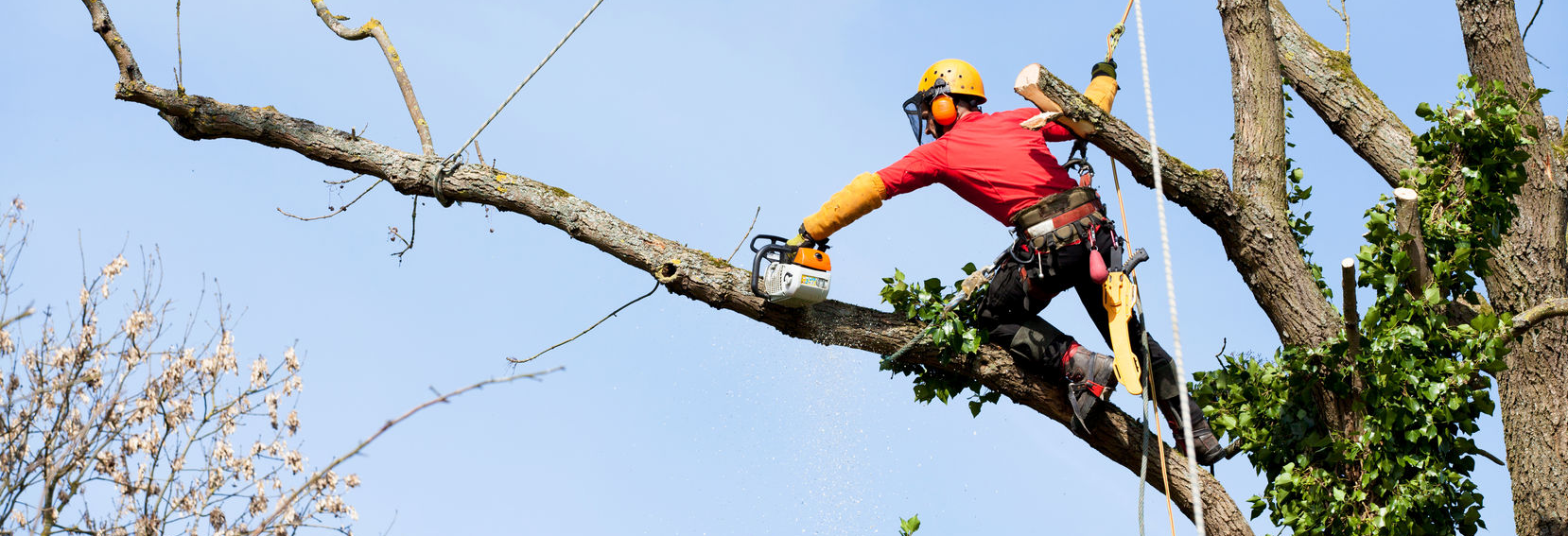 Tree service cutting down a tree.