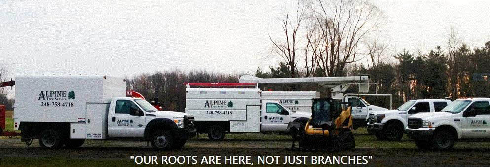 Alpine Tree and Landscaping Inc. in the Metro Detroit areas