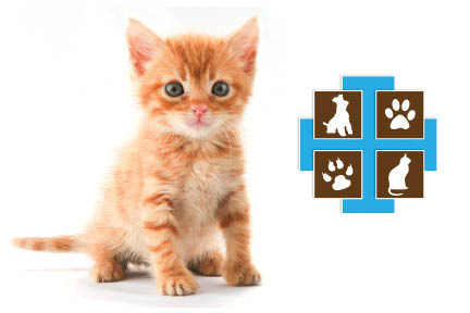 Kittens for sale, adoptions in Pleasanton