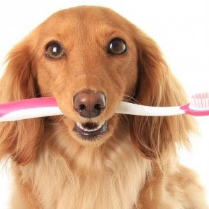 Dental care, pet care