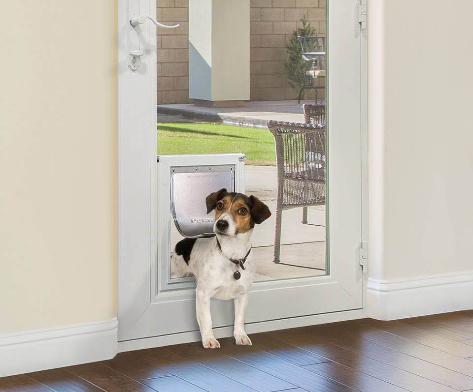 Dog using the dog door