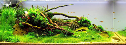 River to Reef, aquarium, fish