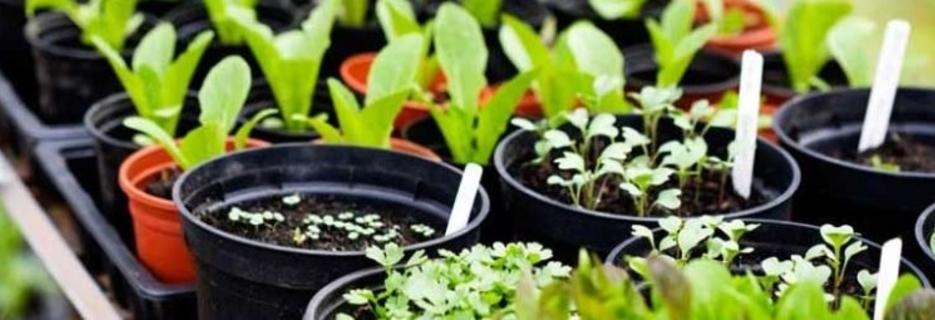 Bakerstown & Glenshaw Feed & Garden centers