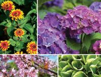 Fertilizer Seeds Perennials Cat Food Dog food Shrubs near me garden plants, perennial flowers and seeds, as well as flowering bushes, trees and ground cover plants to complete your landscape.garden center, nursery & greenhouse.