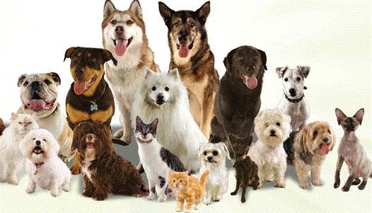 dog & cat vet ballantyne veterinary clinic charlotte, nc