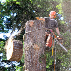 tree cutting services; ballard tree service and landscaping maryland