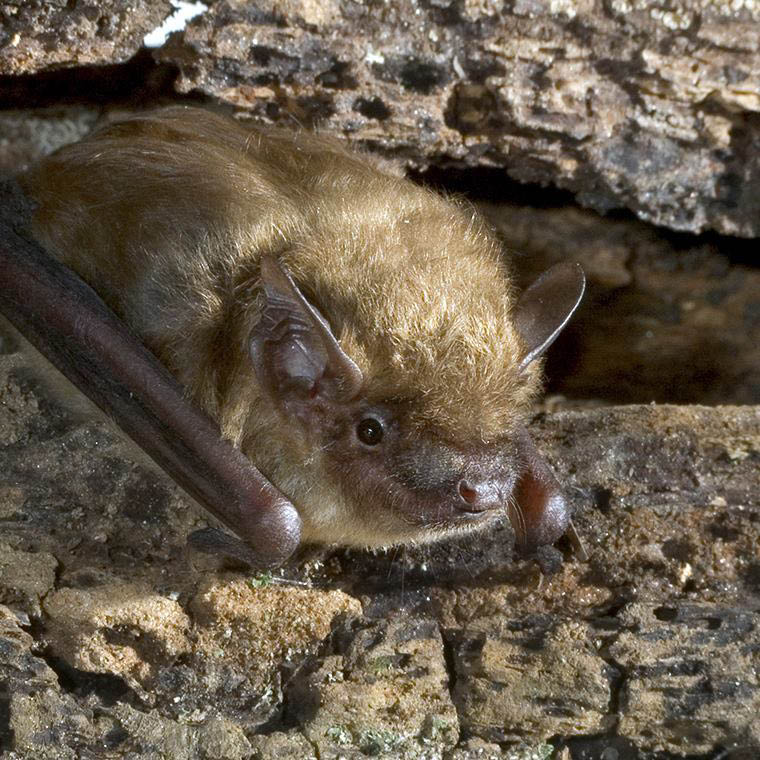 bat at the zoo in schnecksville, pennsylvania