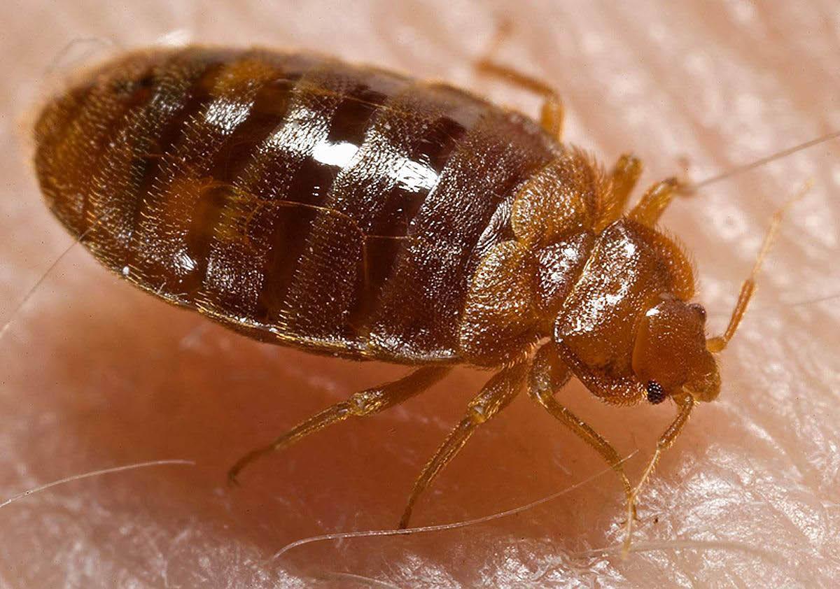 Humphrey's Pest Control - Humphrey's Pest Coupons - Coupons for Pest Control