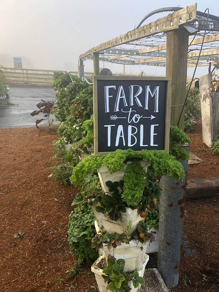 farm to table food at bendetto's