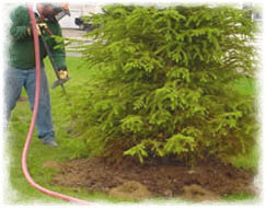 Shrubbery and landscape service in Clarkdale
