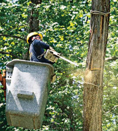 tree cutting, tree removal, stump removal, firewood