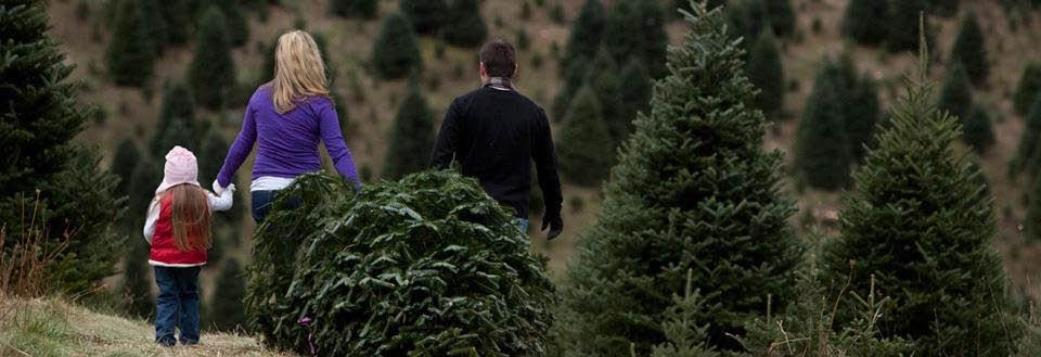 Bringing home a fresh cut Christmas tree banner