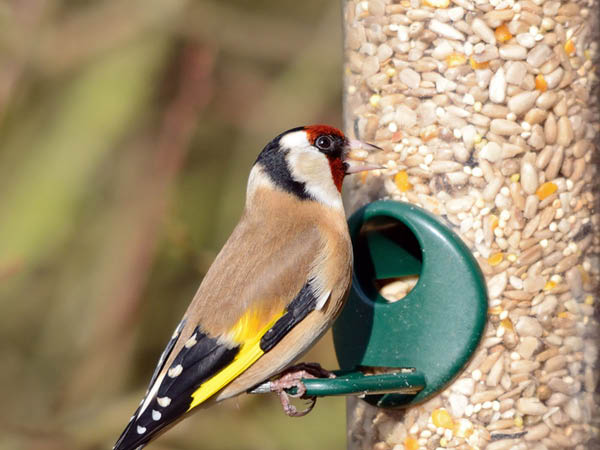 Bird Feeder Fillers helps attract more birds