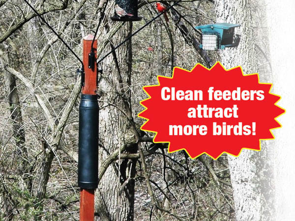 Bird Feeder Fillers bird feeder refill