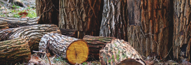 Willco Tree, LLC banner Denver, CO