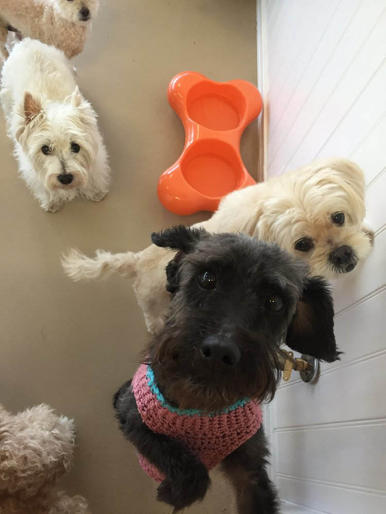 puppy daycare coupons near me puppy boarding coupons near me dog daycare coupons laguna niguel ca
