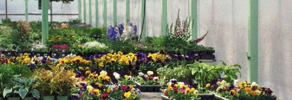 Beautiful variety of flowers and other garden items at Brainer's Greenhouse in Wixom, MI