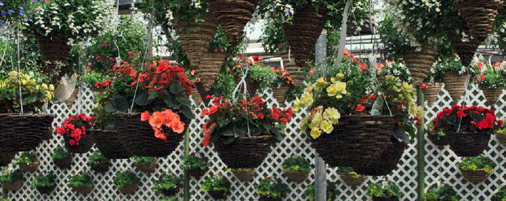 Hanging baskets at Brainer's Greenhouse in Wixom, MI