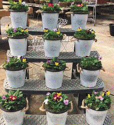 Combo plants at Brainer's Greenhouse in Wixom, MI