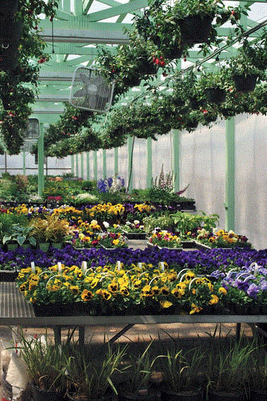 Three generations of perfect plants at Brainer's Greenhouse in Wixom, MI