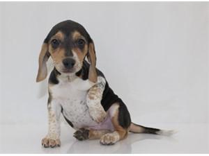 petland, pets, pet food, puppies, hamster, bird, kansas city, blue springs pet store, animals, companion, puppy, pup for sale, adoption