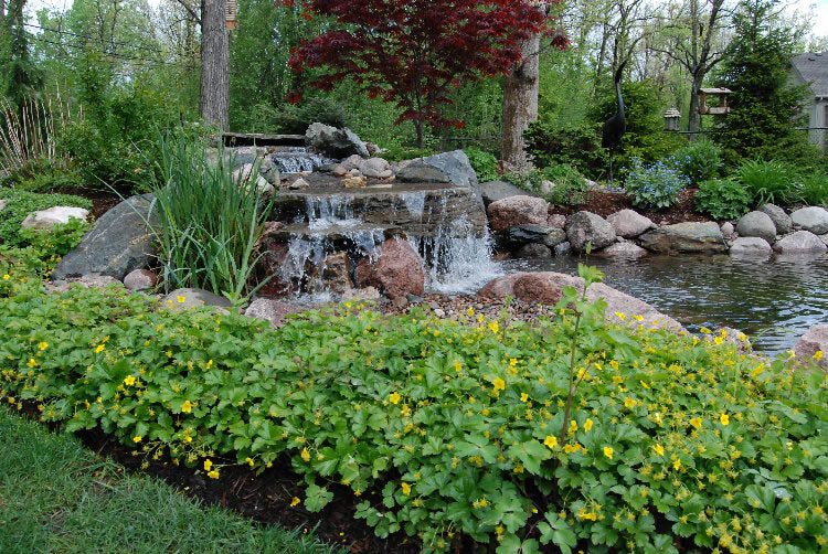 Your trees, shrubs and lawn all give your environment shape, interest and texture.