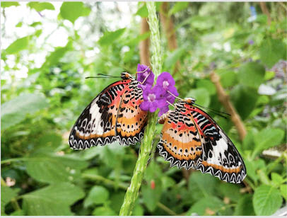 Largest Butterfly Conservatory in Arizona Story Time for Tots and Bug fest coupons