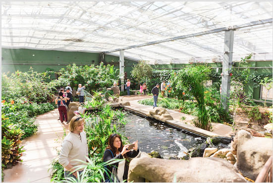 Yoga in the Rainforest for adults in the butterfly conservatory Spring butterfly hike coupons