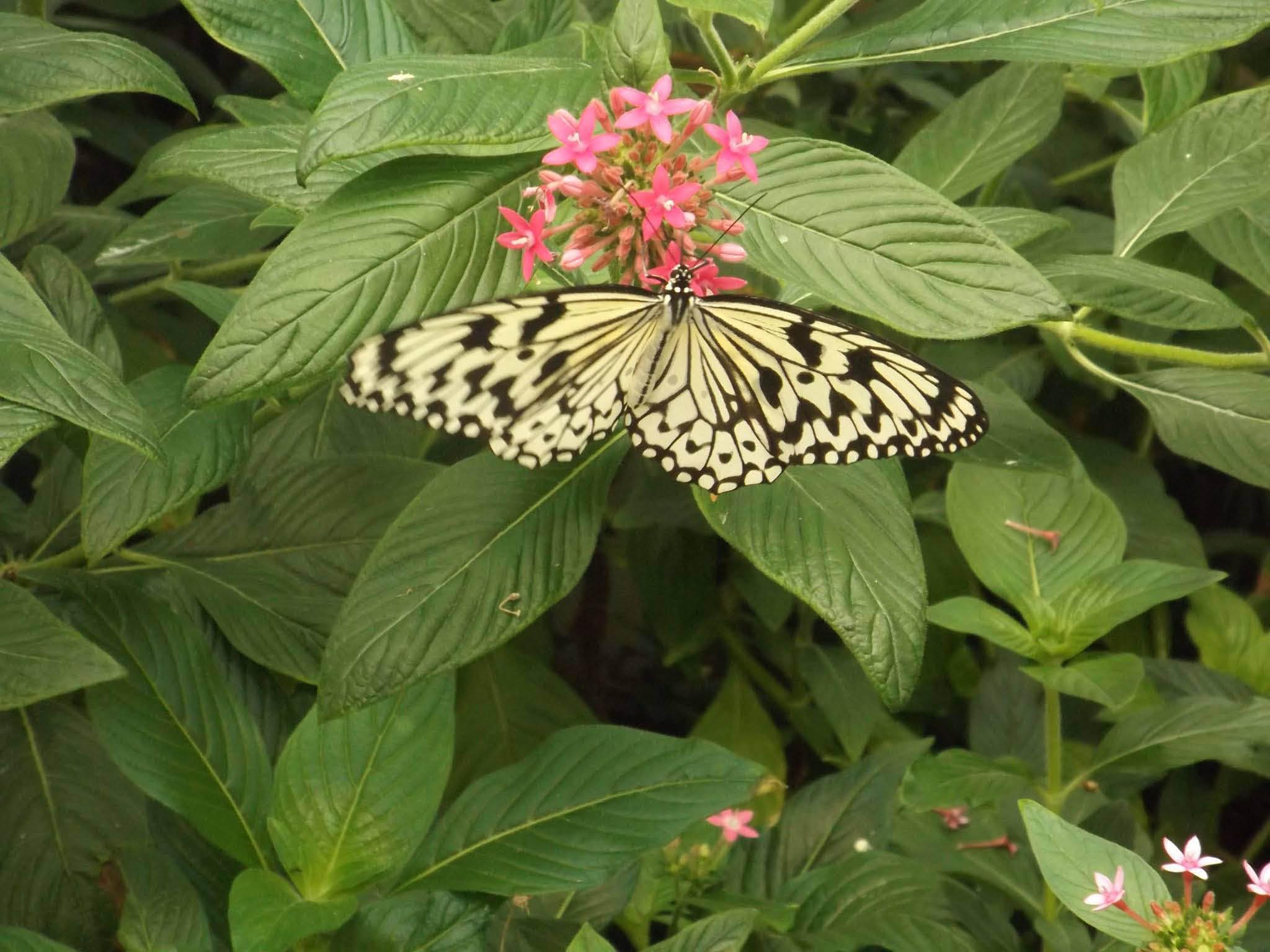 the butterfly house wheeler farms whitehouse ohio