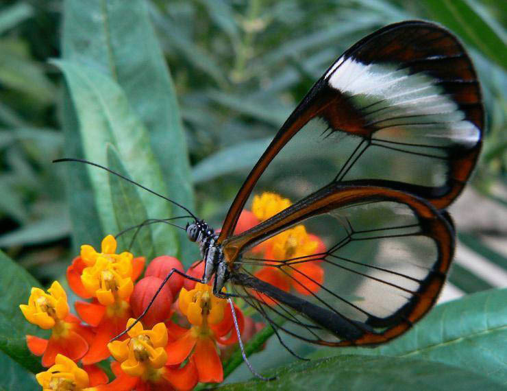 the butterfly house wheeler farms whitehouse ohio attractions near toledo