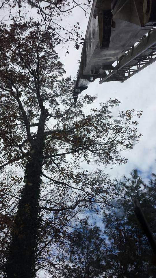 C2 Crane and Tree Services Baltimore maryland tree trimming.
