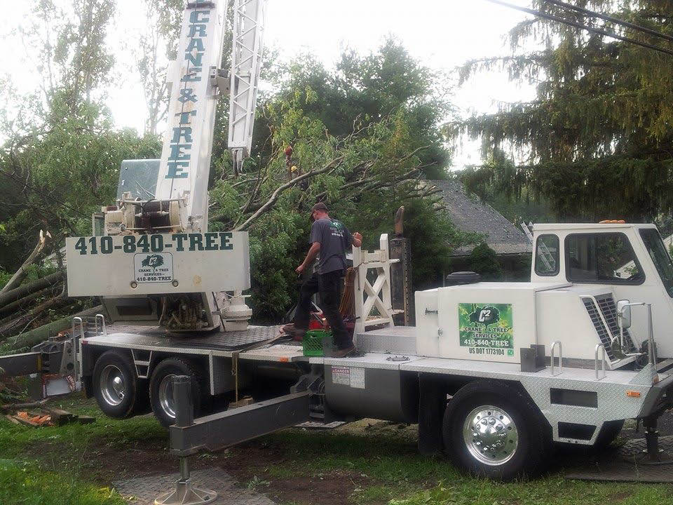 C2 Crane and Tree Services Baltimore md tree service.