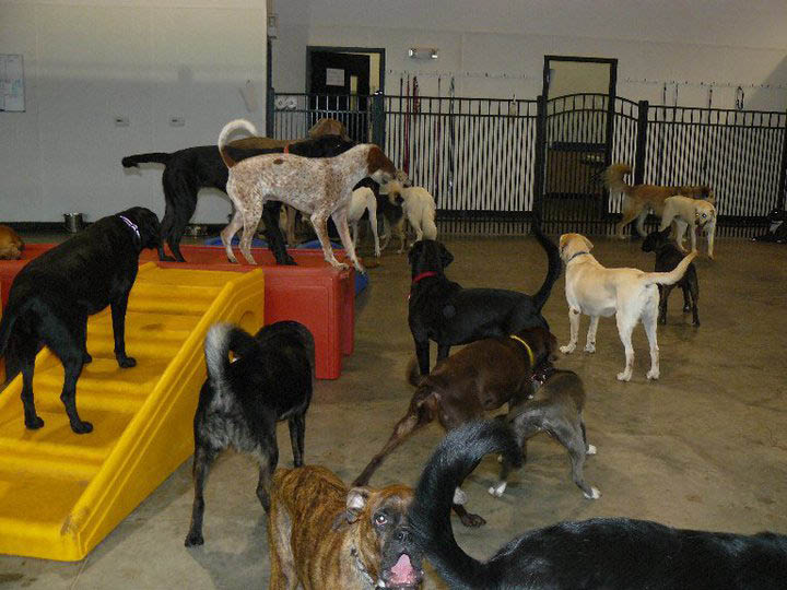 Big dogs in the large dog play area
