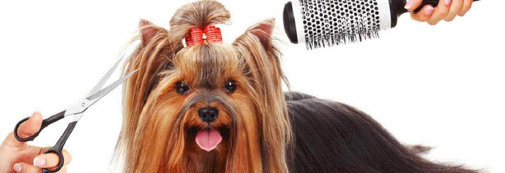 Banner picture of grooming at Canine Divine Dog Grooming in Sterling Heights