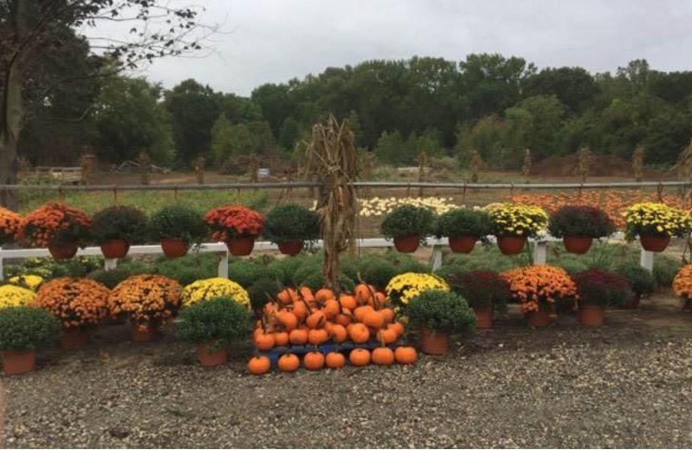 pumpkins, hayride, halloween, mums